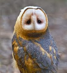 owl-head-turn.png